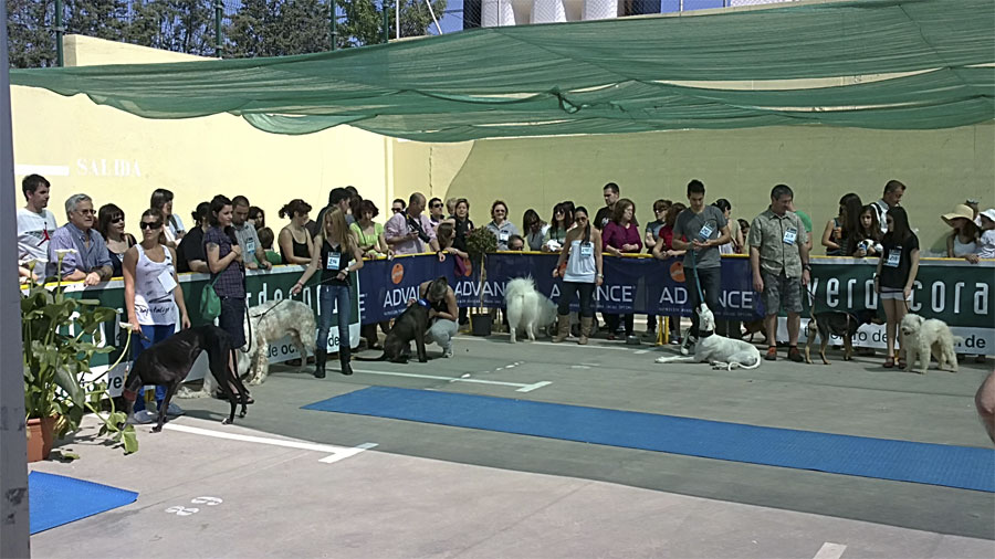 evento canino advance en verdecora torrelodones