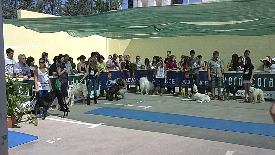 Evento canino advance en verdecora torrelodones for Verdecora torrelodones