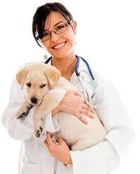 Campaña oficial de vacunación e identificación animal 2015